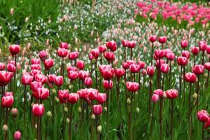 Kvety v záhrade majú nezastupiteľné miesto